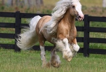 Equine Affair / by Jami Myatt