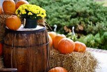Holiday-Fall / by Bethany Aten