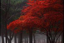 Trees / by Elizabeth Gallagher Kennedy