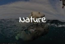 Nature / by Rob Snow