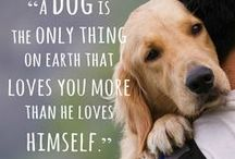 DOGGIES THEY ARE FAMILY TOO! / by Kim Himes