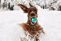 It's a Dog's Life / A girl's best friend / by Danielle Utter