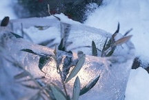 Signs of Winter  / by Beth Ellsmere