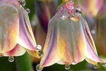 ❀...Dew & Water Drops / by Jen Luff