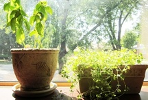 Gardening & Outdoor Living / by Pamela Strother