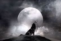 WOLF SONG / MOON TALKER / by Mikele - Bodie's Mama