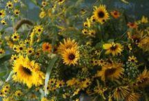 The Flower Shop / ~Shamrock Inspiration~ / by Jill Marcott-McCall ~* Feathers & Flight*~