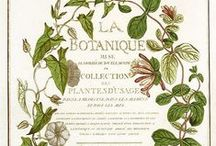 La Botanique / Antique Botanical  / by Jill McCall ~* Feathers & Flight*~