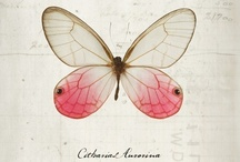 Butterflies , Dragonflies and Bees / by Josephine Watson