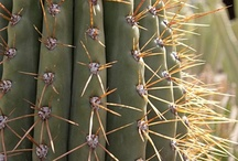 cactus / by Vivi Cardozo