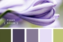Color Palates / by