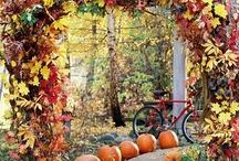 Fall / by Robyn Rubins