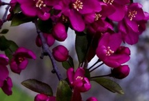 Gardens , Flowers & Nature ... / by Sana Fatima