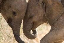 Elephants / by Theresa Hardy