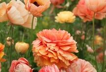 Flowers and Gardening  / by Bobbie Wilson