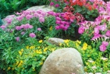 luvs2garden / by Peggy Welty Hays