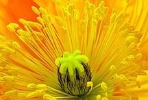 Flora / by Jacqui Jellis