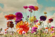 May Flowers / We have to get through the cold Iowa winter to get to the beautiful spring flowers! / by WHO-HD 13