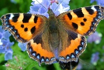 Butterflies  & Moths / by Penny Thompson