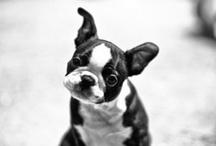 Pups Volume 2 / by Tulip Kinjati