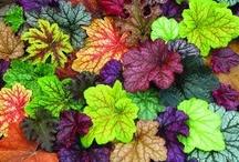 Gardening / by Nancy Weeks