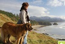 Lugares / Places / Você gosta de viajar com seu cão ou gato? Pine lugares em que você foi ou gostou de ver um peludo em momento de viagem e lazer! Vale dicas também! Vamos conhecer lugares ótimos sob a ótica da fofura! ;) / by Equilíbrio