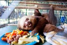 Sloth Friday / I scour the Interwebs for the cutest sloth pictures I can find. Why Sloth Friday you ask? Well...they took all week to get here I say! / by Michelle Murray
