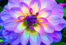 flowers / by Georgiann Mason