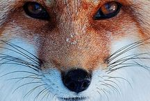 ANIMALS *amazing* / by Suzhi