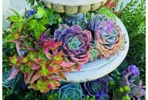 Ideas / by Nature's Best Floral