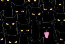kitty / black cats are my favorite! :) / by Amoreena Peralta