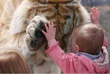 Animals <3 / by Samantha Barnes