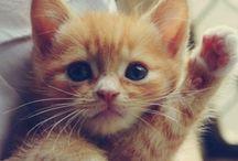 Kitty Cats / by Lorraine LaBruna