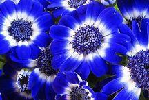 Feelin Blue  ☔ / by Lorraine LaBruna