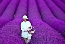 Purple  / by Lorraine LaBruna