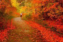 Autumn  / by Lorraine LaBruna