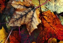 Thankful for Autumn / by Diane