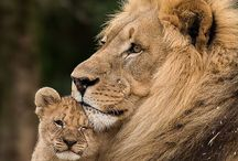 Cats in the Wild / by Lorraine LaBruna