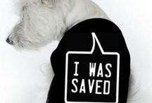 I Was Saved!!! #5 / I will also include those dogs whose page is no longer available since some rescues take the post down as soon as it is adopted - hopefully that is what happened!!  THANK YOU TO EVERYONE WHO HELPED THESE ANIMALS!!! / by Nicole Souders