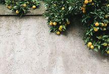 For the Garden/Balcony / by Cincia Bigia