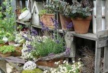 Garden Sheds / by Elaine Sullivan