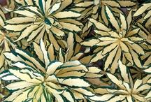 Just plants / by Elaine Sullivan