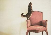 Crazy cat lady / by Cincia Bigia