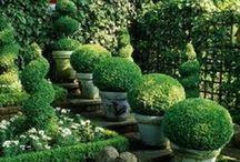 Garden Design / by Margo Fort Hall