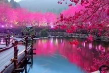 Take me there! / by Hana Khalifa