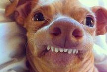 FUNNY!! / LAUGHING / by Randi Nichols