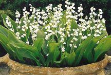 Garden Inspiration / by Louise Ireland
