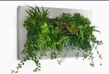 Indoor Gardening / We all need a little green in our lives.  / by Inhabitat