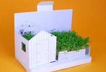Miniature Gardens / by Inhabitat