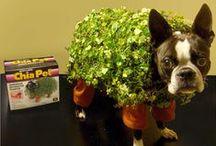 Green Halloween! / by Inhabitat